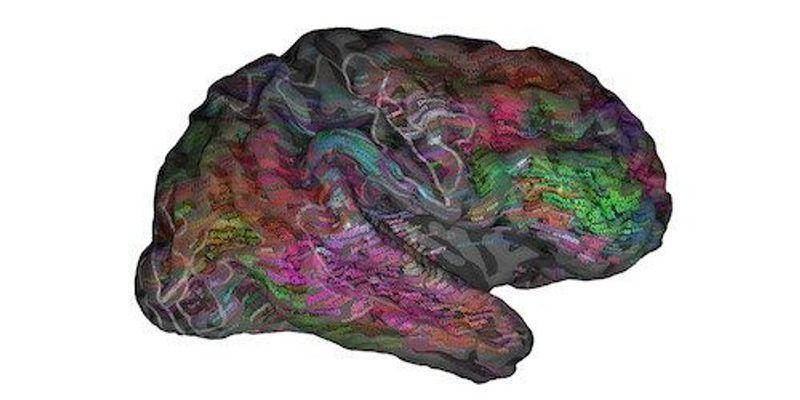 Locating Language within the Brain