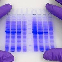 LabQuiz: Western Blot Reproducibility