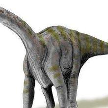 Newborn Dinosaurs