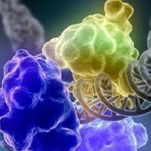 Advances in Genome Editing
