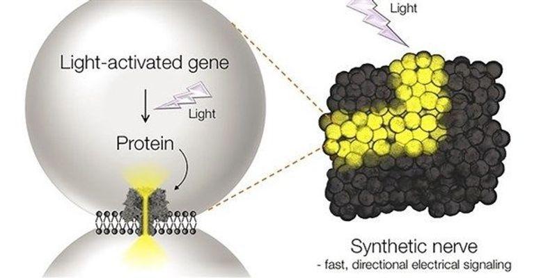 Next Generation: Toward Synthetic Neural Tissue