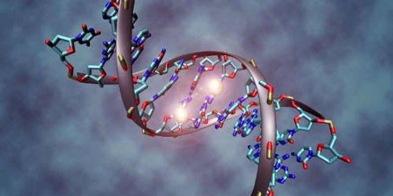 New Epigenetic Mark Confirmed in Mammals