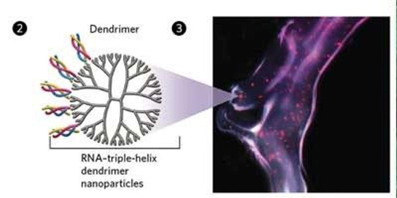 Tumor-Shrinking Triple-Helices