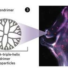 Tumor-Shrinking Triple-Helices