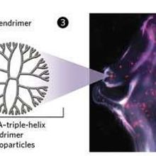 Anticancer microRNA Braids
