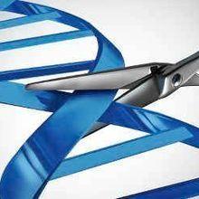 LabQuiz: Genome Editing