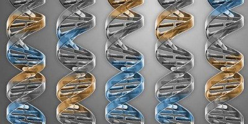 Minimal Genome Created