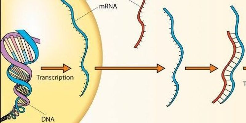 CRISPR Can Tag RNA