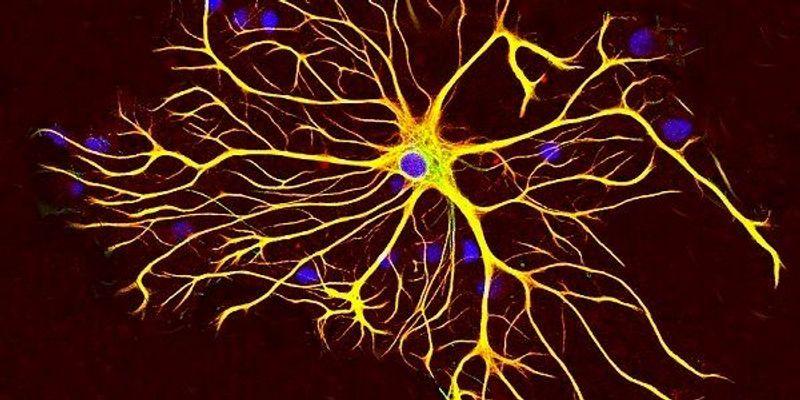 Brain Prize Winners Announced