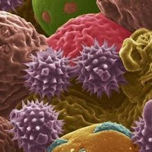 Image of the Day: Pollen Power