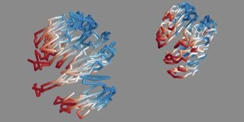 Aging Shrinks Chromosomes