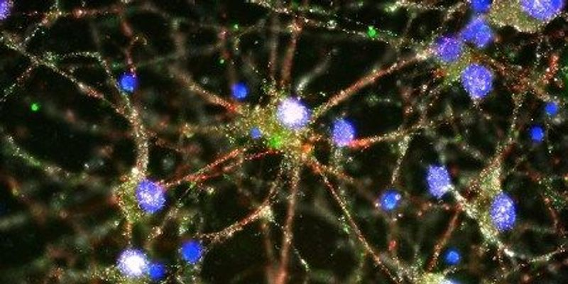 Schizophrenia and the Synapse