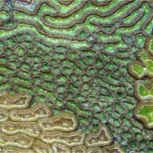 Image of the Day: Pretty Polyps