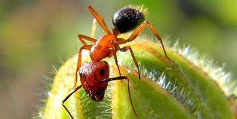 Epigenetic Alterations Determine Ant Behavior