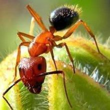 Epigenetic Alterations Determine Ant Behavior
