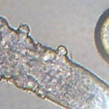 Mining the Mite-ochondrial Genome