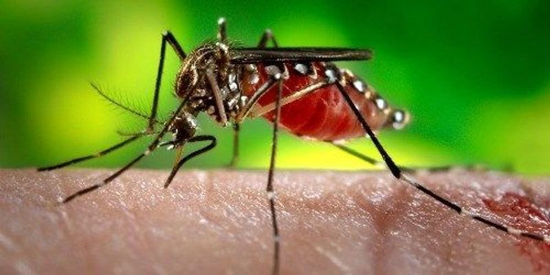 First Dengue Vax Approved