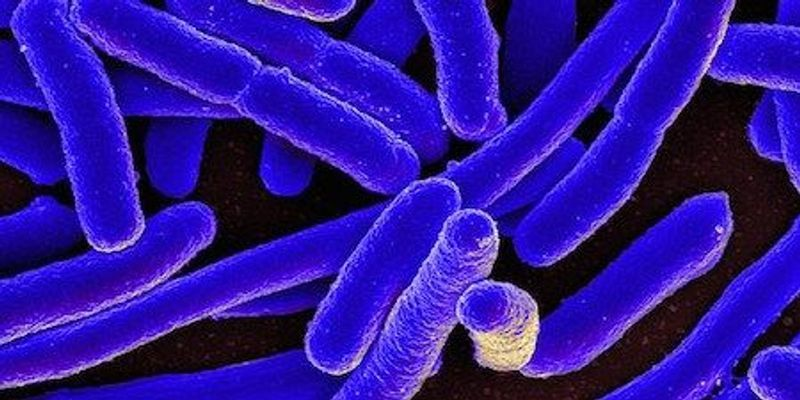 Controlling Synthetic Bacteria