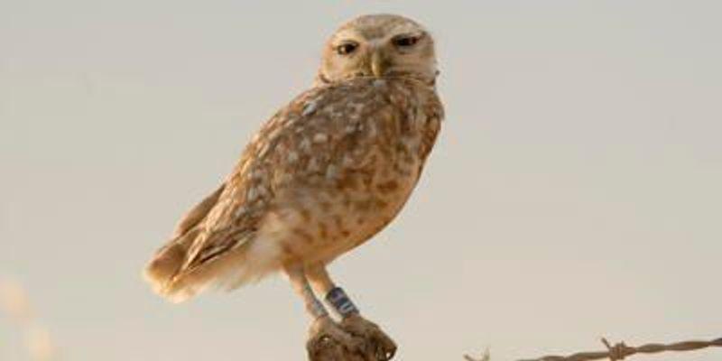Owl Be Darned