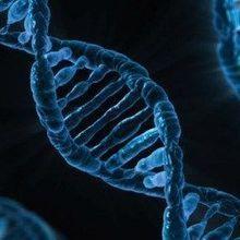 A More-Precise CRISPR/Cas9