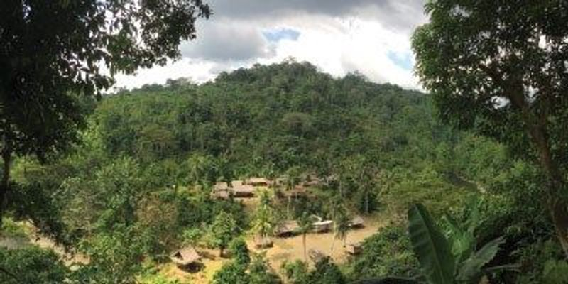 A Rainforest Chorus