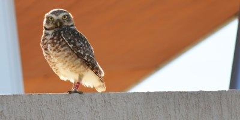 Urban Owl-Fitters