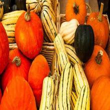 Pumpkins Saved By People?