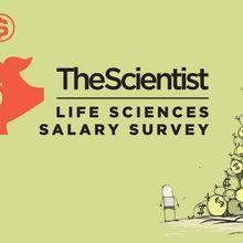 Salary Survey | The Scientist Magazine®