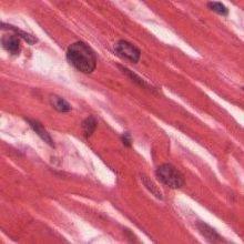 Latest in Heart Stem Cell Debate