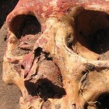 Bronze Age Plague Sequenced