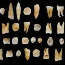 Fossil Teeth Rewrite Human Migration to Asia