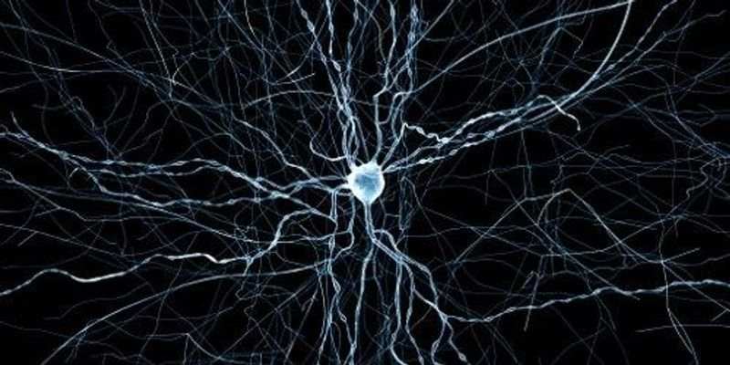 Digital Rat Brain