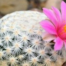 One-Third of Cactus Species Threatened