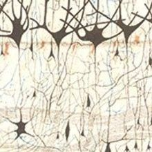 The First Neuron Drawings, 1870s