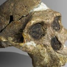 Early Hominin Hearing