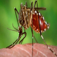 Dengue's Downfall?