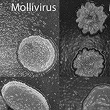 Another Ancient Giant Virus Discovered