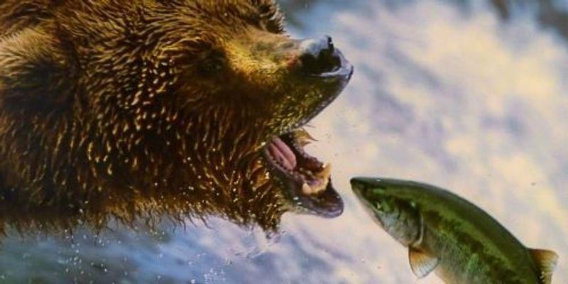 Bear Study Breaks Down