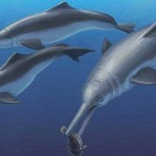 New Species Links River and Oceanic Dolphins
