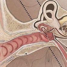 Human Hearing: A Primer