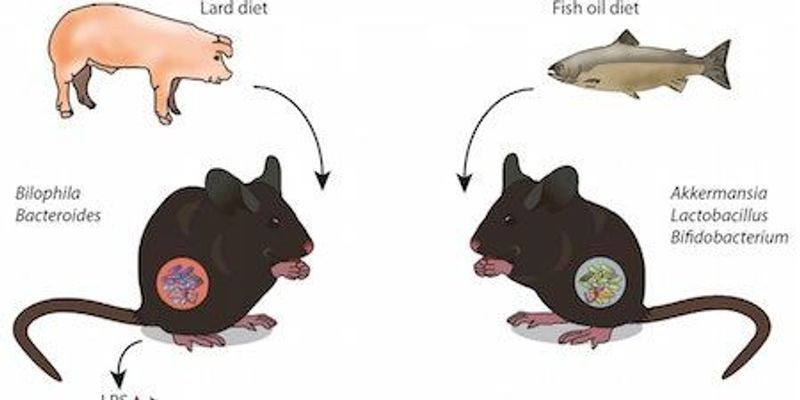 How Fats Influence the Microbiome