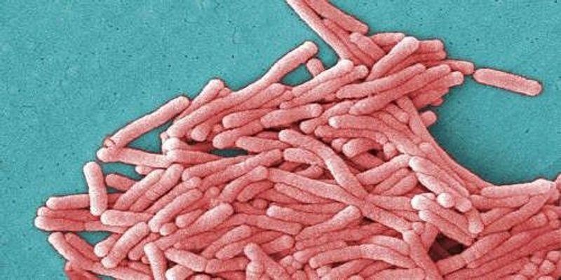 Legionnaires' Bacteria at GSK