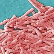 Legionnaires' Bacteria at GSK