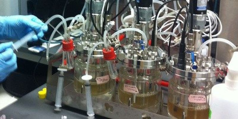 Yeast-Based Opioid Production Completed