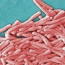 Legionnaires' Disease Kills Eight in NYC