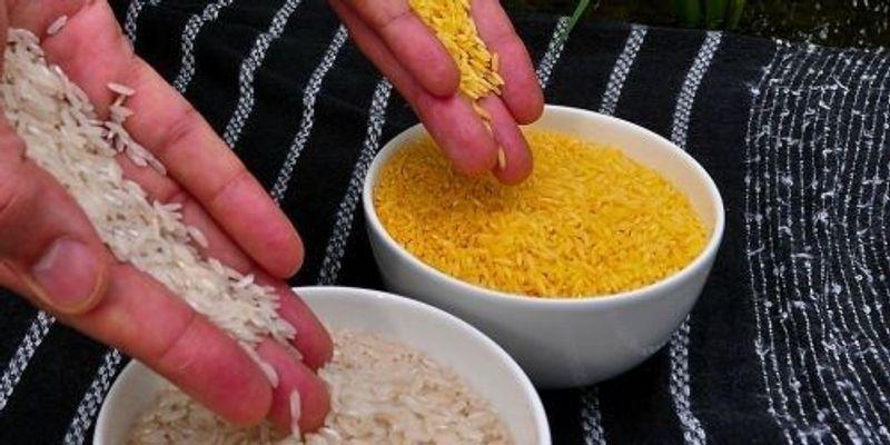 Judge Decides on GM Rice Retraction