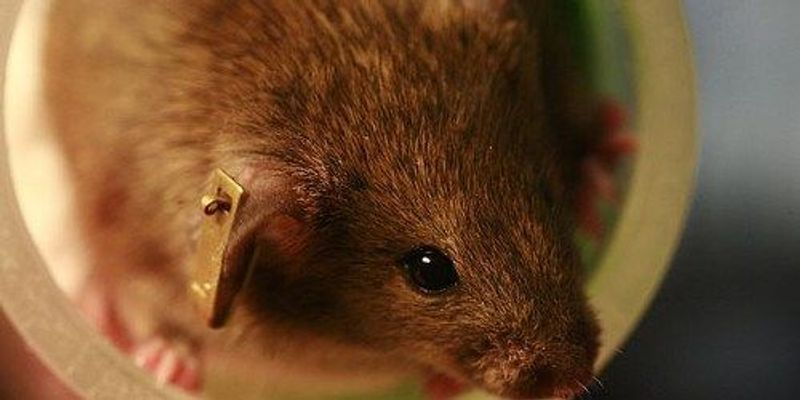Mouse Study Catalogs Gene Functions