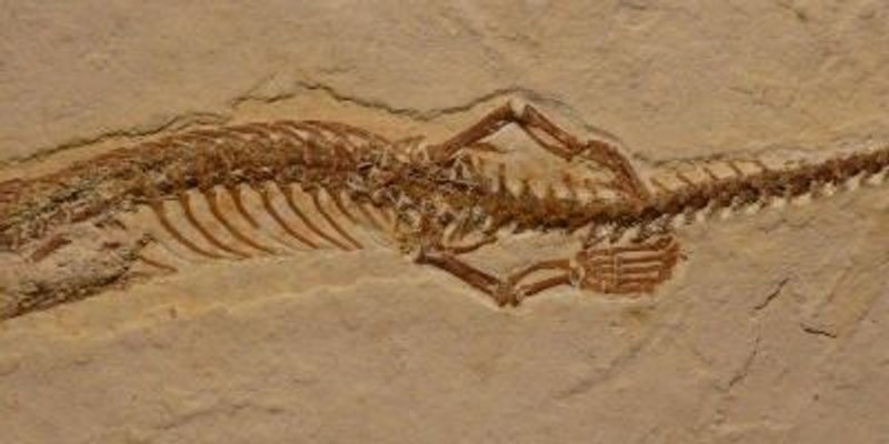 Four-legged Snake Fossil Found