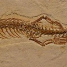 Four-legged Snake Fossil Found