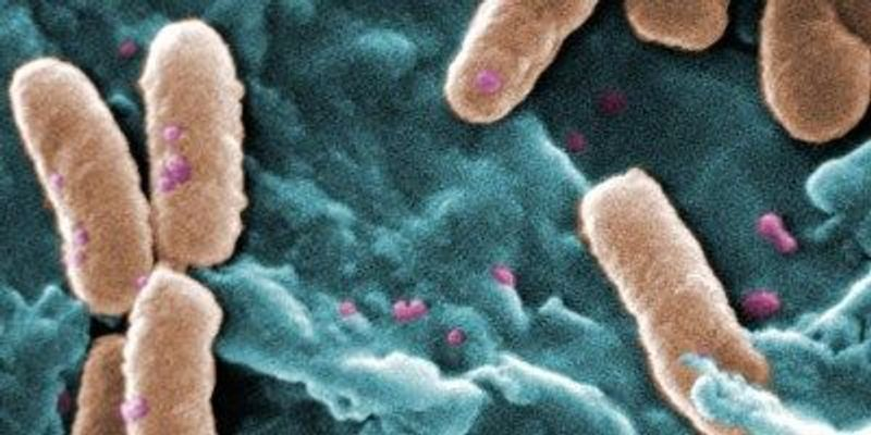 Antibiotic Resistance Can Boost Bacterial Fitness